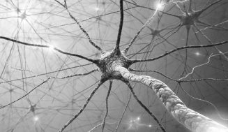 Neuronas haciendo nuevas conexiones sinápticas.